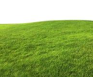 Предпосылка текстуры зеленой травы изолированная на белой предпосылке Стоковое фото RF