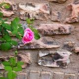 Предпосылка текстуры каменной стены Стоковые Изображения RF