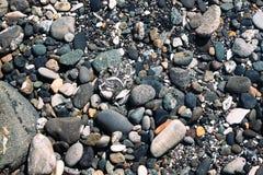 Предпосылка текстуры камешков стоковые изображения rf