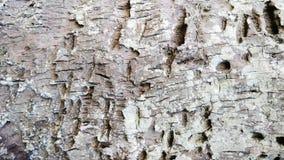 Предпосылка текстуры кокосовой пальмы деревянная изображение ландшафта природы Стоковое Фото
