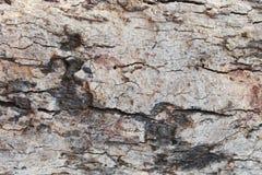 Предпосылка текстуры коры дерева черный brougham стоковая фотография rf