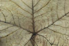 Предпосылка текстуры лист, конец-Вверх против предпосылки голубые облака field wispy неба природы зеленого цвета травы белое Стоковая Фотография RF
