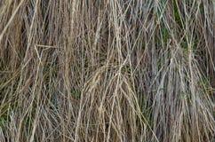 предпосылка текстуры сухой травы Стоковые Изображения RF