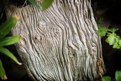 Предпосылка текстуры цвета природы деревянная старая текстура деревянная Стоковое Изображение RF