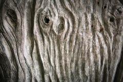 Предпосылка текстуры цвета природы деревянная старая текстура деревянная Стоковые Изображения
