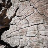 Предпосылка текстуры цвета природы деревянная старая текстура деревянная Стоковые Фото