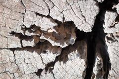 Предпосылка текстуры цвета природы деревянная старая текстура деревянная Стоковые Изображения RF