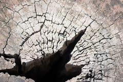 Предпосылка текстуры цвета природы деревянная старая текстура деревянная Стоковое Фото