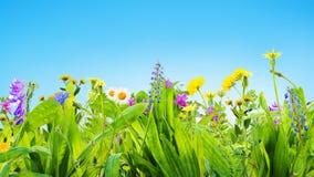 Предпосылка травы и полевых цветков стоковые изображения