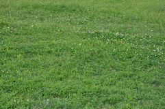 Предпосылка травы и цветков горизонтальная стоковые фотографии rf