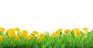 Предпосылка травы и цветков стоковое изображение rf