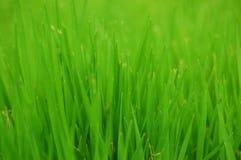 Предпосылка травы стоковое изображение rf