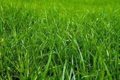 Предпосылка травы стоковые изображения