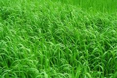 предпосылка травянистая Стоковое Изображение