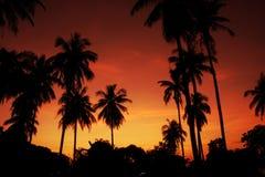 предпосылка тропическая Стоковые Фотографии RF