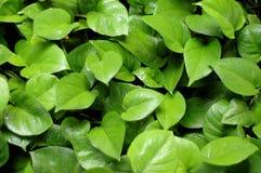 Предпосылка тропических листьев стоковое изображение