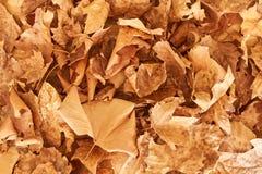 Предпосылка упаденных листьев Стоковая Фотография