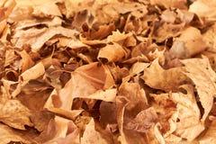 Предпосылка упаденных листьев Стоковое Изображение RF