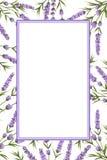 Предпосылка фиолетовой лаванды цветет, цветки стиля акварели стоковые фотографии rf