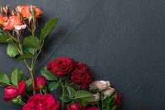 предпосылка флористическая подняла Стоковое Фото