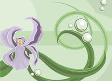 предпосылка флористическая Стоковое фото RF