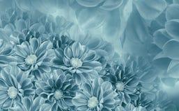 Предпосылка флористической бело-бирюзы красивая георгинов тюльпаны цветка повилики состава предпосылки белые Стоковое фото RF