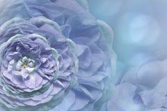 Предпосылка флористической сине-бирюзы красивая тюльпаны цветка повилики состава предпосылки белые Поздравительная открытка от ро Стоковое фото RF