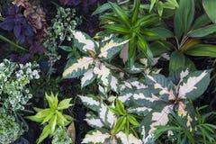 Предпосылка фото лета густолиственная Тропический завод листвы в экзотическом саде Стоковое Фото