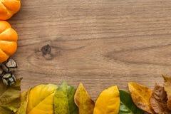 Предпосылка хеллоуина с листьями и тыквами Стоковое Изображение