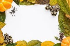 Предпосылка хеллоуина с листьями и тыквами Стоковое Фото