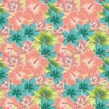 Предпосылка цвета конспекта гибискуса Plumeria безшовная Стоковые Фото