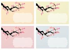 Предпосылка цветения вишни Стоковые Изображения RF