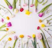 предпосылка цветет белизна Стоковое фото RF