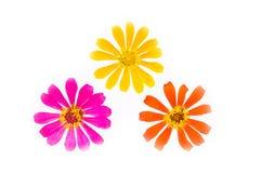 предпосылка цветет белизна Стоковые Изображения