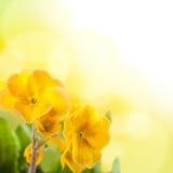 предпосылка цветет белый желтый цвет стоковое фото