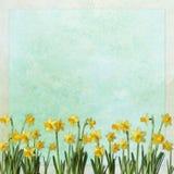 предпосылка цветет весна бесплатная иллюстрация