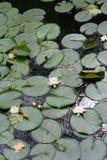предпосылка цветет вода Стоковые Изображения RF