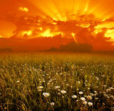 предпосылка цветет заход солнца Стоковое Изображение