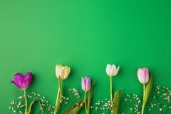 предпосылка цветет зеленый пинк Стоковая Фотография