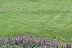 предпосылка цветет зеленый цвет травы w Стоковое фото RF