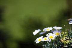 предпосылка цветет зеленый цвет Стоковые Изображения