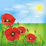 предпосылка цветет маки природы бесплатная иллюстрация