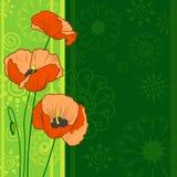 предпосылка цветет мак Стоковое Фото