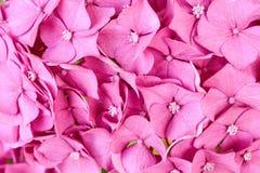 предпосылка цветет пинк Стоковые Изображения RF