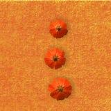 предпосылка цветет помеец Стоковое Изображение RF