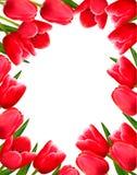 предпосылка цветет свежая красная весна Стоковое Фото