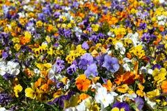 Предпосылка цветка, близко к концепции природы стоковая фотография