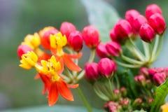Предпосылка цветка флоры природы - близкая вверх малого красивого flo Стоковое Изображение RF