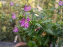 Предпосылка цветка Garden Стоковые Изображения