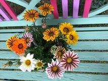 Предпосылка цветков Gazania зацветая Стоковое Изображение RF